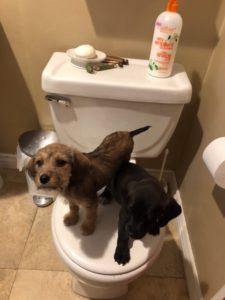 Cute TP Challenge Pups