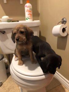 Pups in TP Challenge
